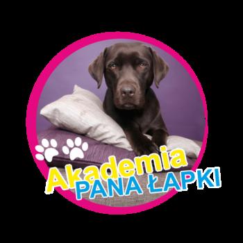 Pies siedzący na poduszkach